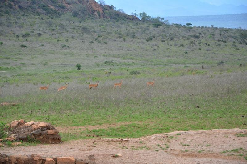 photos du kenya  Dsc_0587
