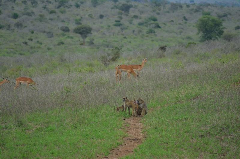 photos du kenya  Dsc_0588