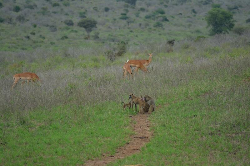 photos du kenya  Dsc_0589