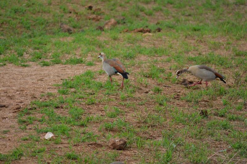 photos du kenya  Dsc_0621