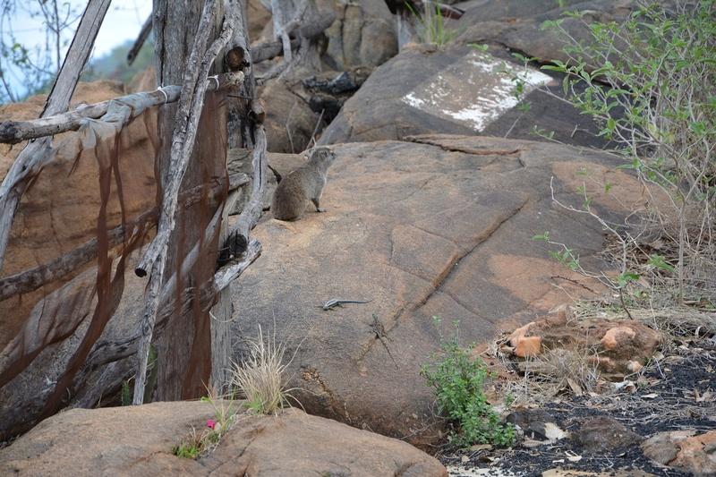 photos du kenya  Dsc_0627