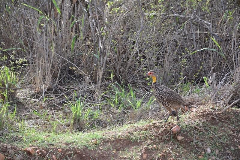 photos du kenya  Dsc_0635