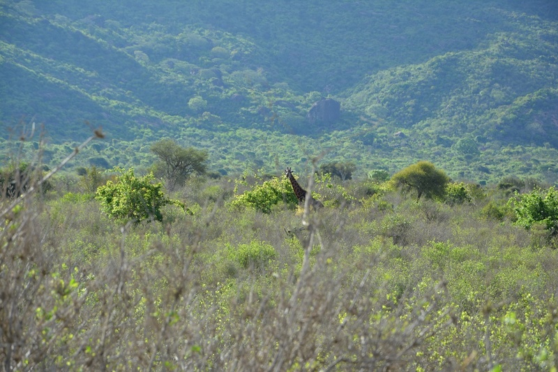 photos du kenya  Dsc_0638