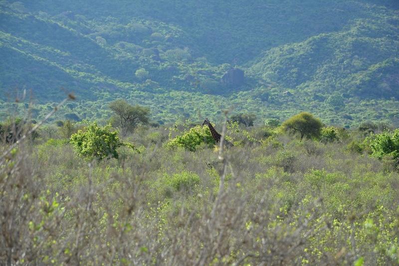 photos du kenya  Dsc_0639