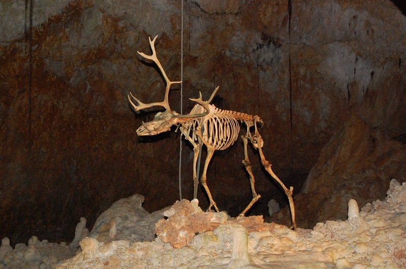 la grotte de la forestiere Dsc_2008