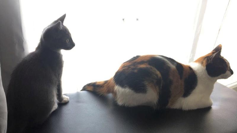 niokie - NIOKIE, chatonne grise et blanche, née début Mai 2017 Img_3310