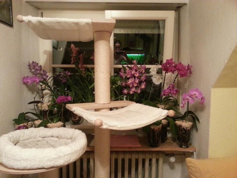 Orchideen in Glasvasen 6 (SGK) - Seite 17 Wp_20121