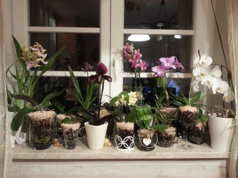 Orchideen in Glasvasen 6 (SGK) - Seite 17 Wp_20122