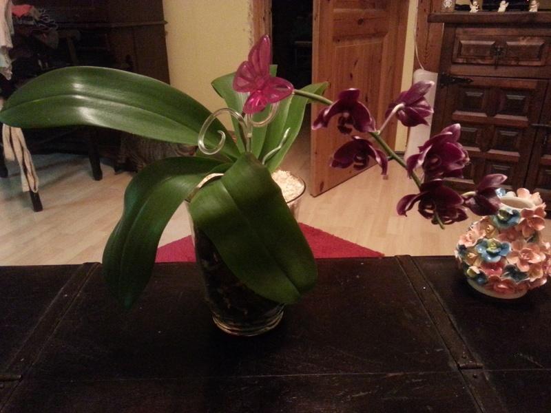 Orchideen in Glasvasen 6 (SGK) - Seite 17 Wp_20123
