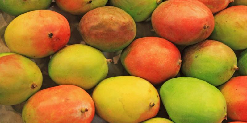 La biotecnologia en plantas y el mango