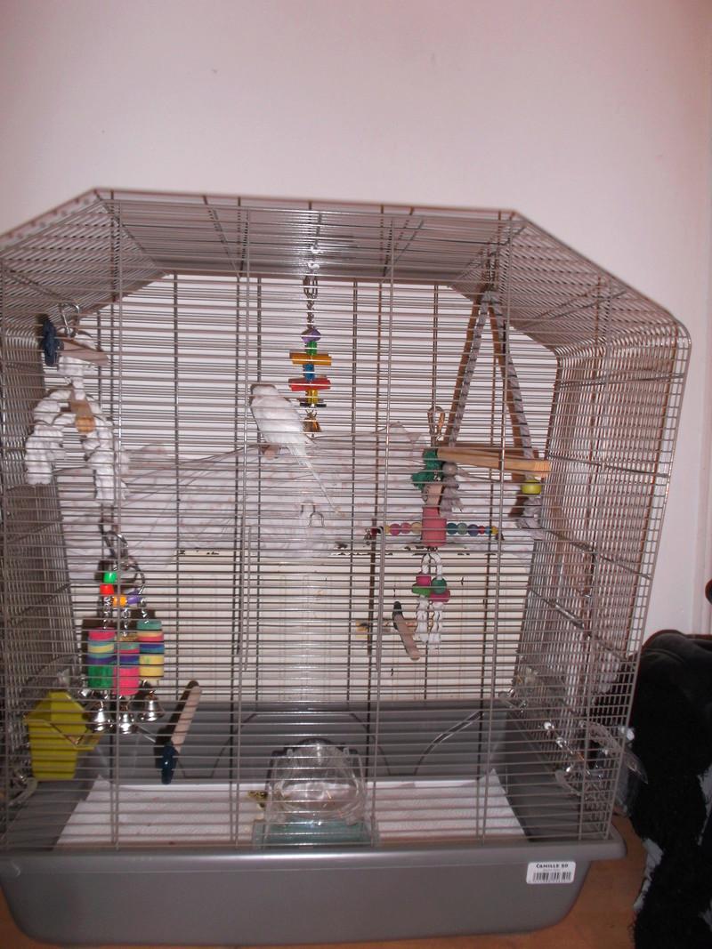 La cage de Piwi et Pilou Dscf2110