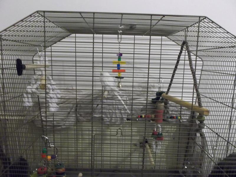 La cage de Piwi et Pilou Dscf2111
