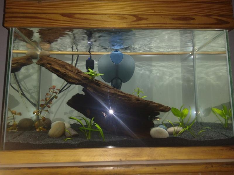 Nuevo acuario 60 litros guppys orejones Img_2011