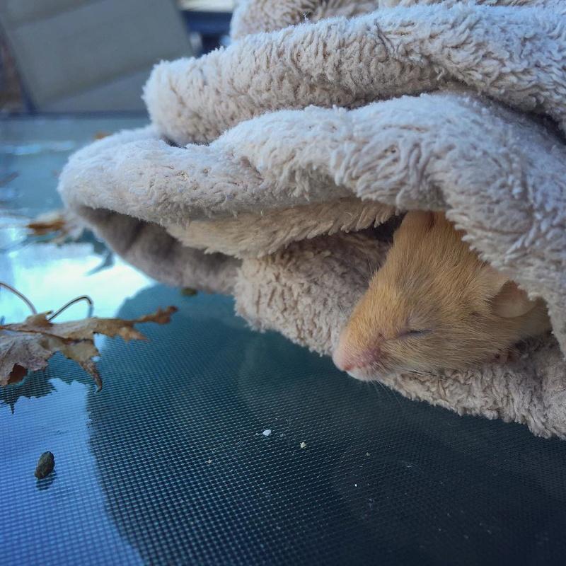 Pumpkin Mice - Updates 2016-114