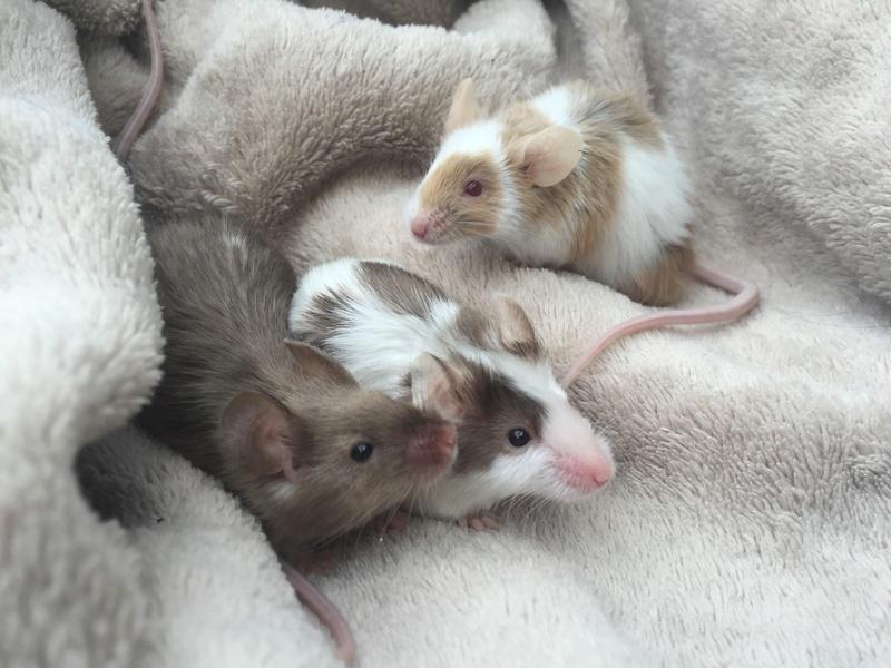 Pumpkin Mice - Updates Img_4811