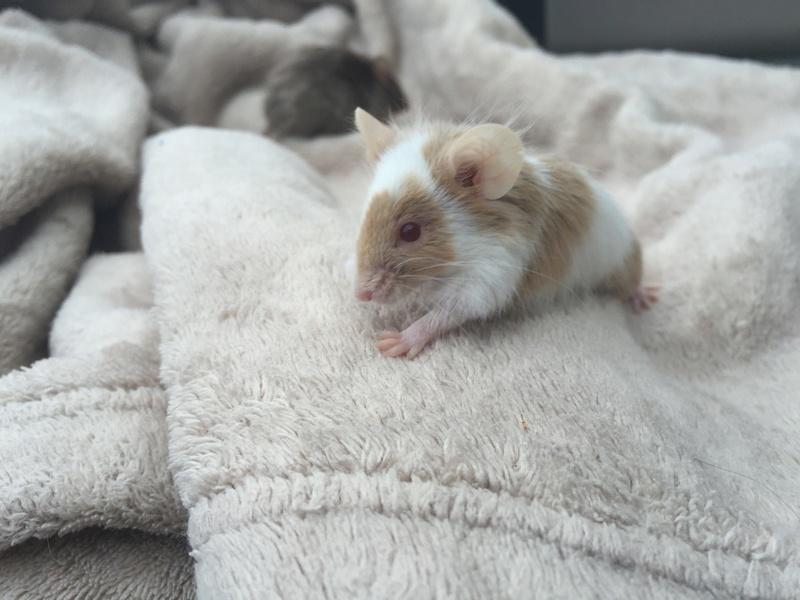 Pumpkin Mice - Updates Img_4812