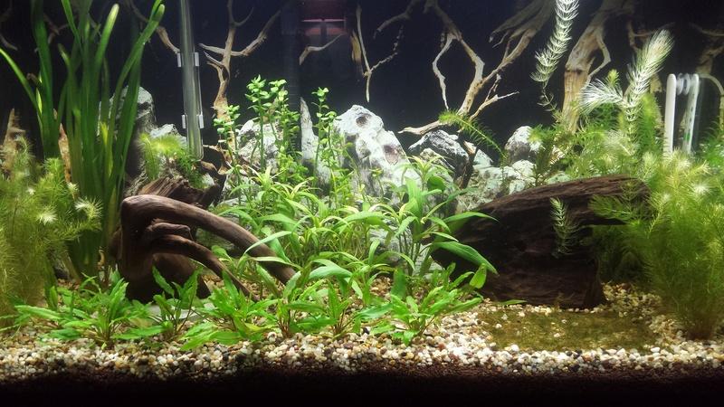 Reconfiguer bac pour les poissons? 20170910