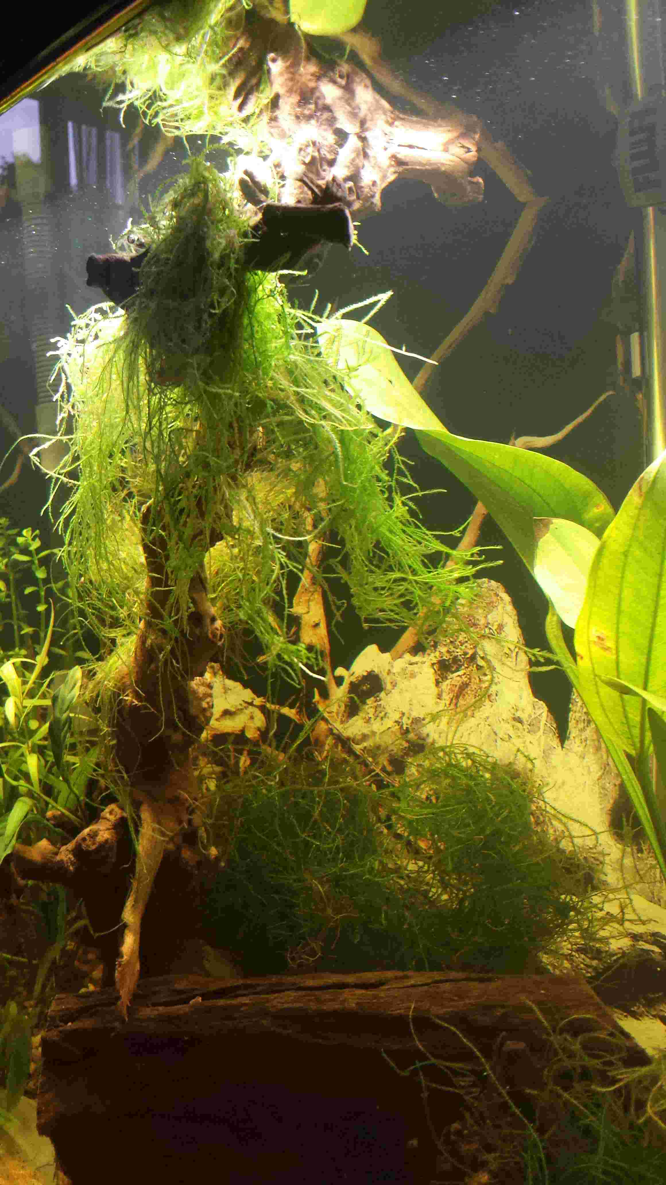 Seashem Flourite black sand et Corydoras Habrosus - Page 2 20170968