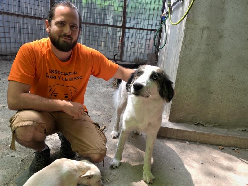 Pumba, chienne née en 2015, taille moyenne-grande P1020917