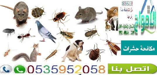 شركة مكافحة حشرات بالرياض0535952058الامواج 1914