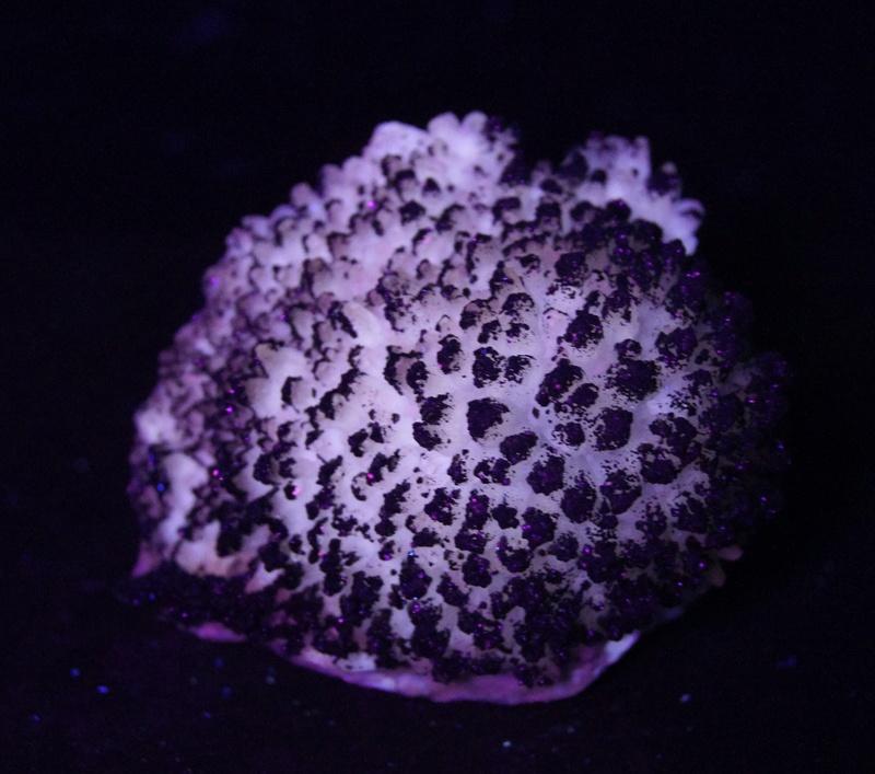 Colección de Minerales Fluorescentes - Página 4 Fullsi11