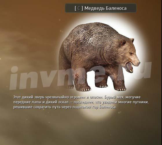 Bíblia do Conhecimento Ecologia de Balenos Urso_d10