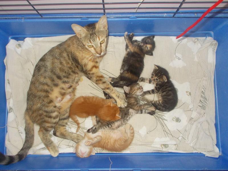 5 γατάκια ψάχνουν σπίτι!  Dscn4610