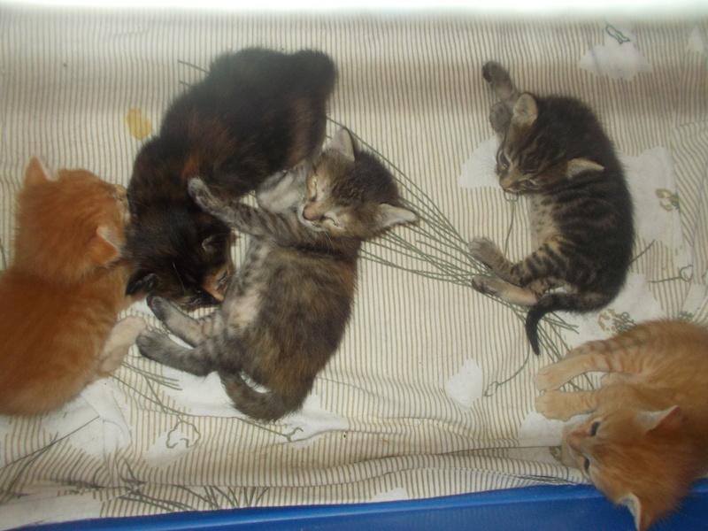 5 γατάκια ψάχνουν σπίτι!  Dscn4611