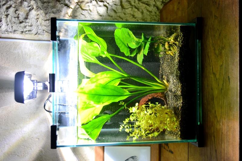 Mon aquarium qui attend son habitant Aqua_c11
