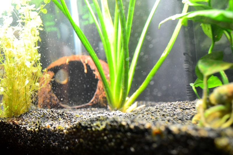 Mon aquarium qui attend son habitant Noix_d10