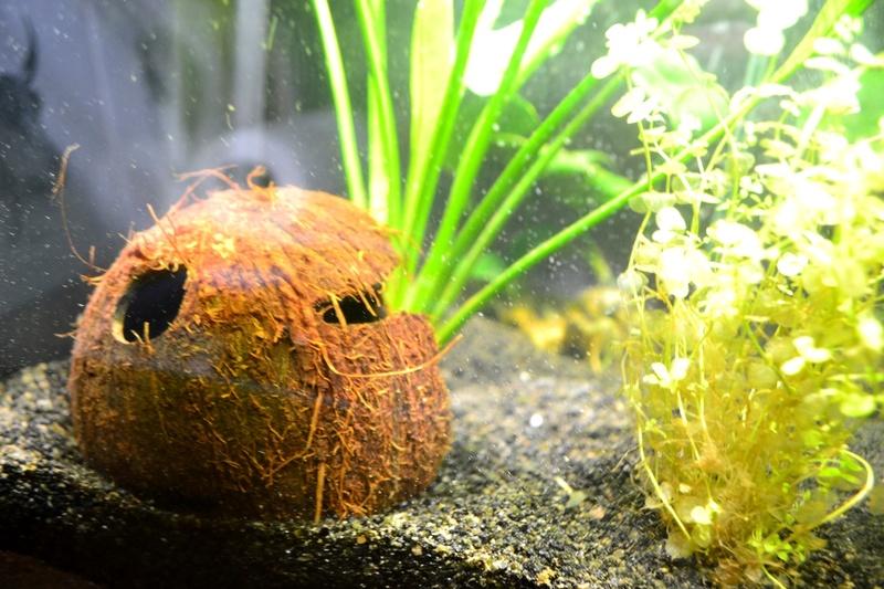 Mon aquarium qui attend son habitant Noix_d11