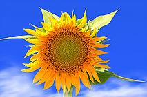 Journée 8, ce samedi 30 septembre : NANTES – METZ à 20 H - Page 2 B8b6e010