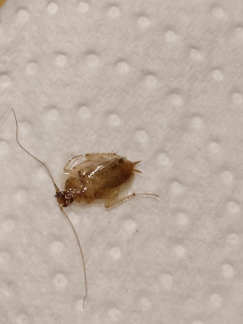 Identifier un insecte dans mon appartement Img_2010
