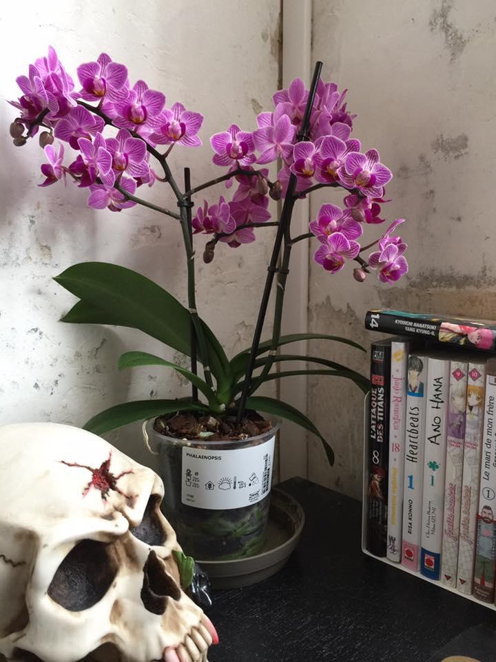 Mes petites orchidées :) 18157111