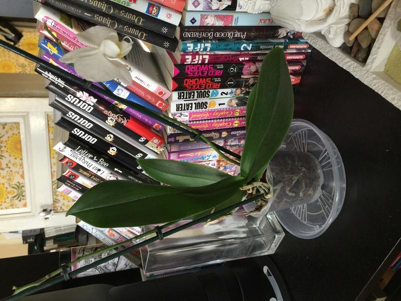 Mes petites orchidées :) Photo_22