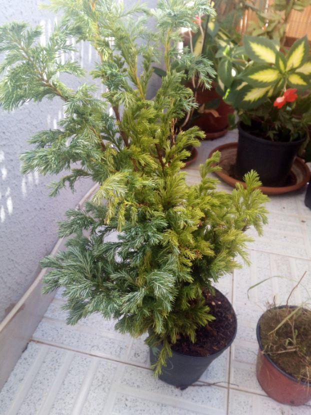 Alguien conoce este arbolito? Planta12