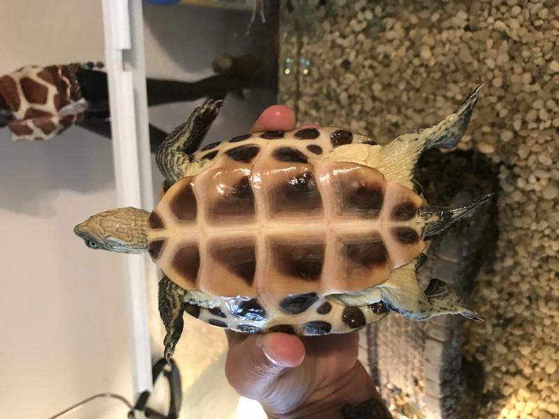 identification de ma jolie tortue Img_2312