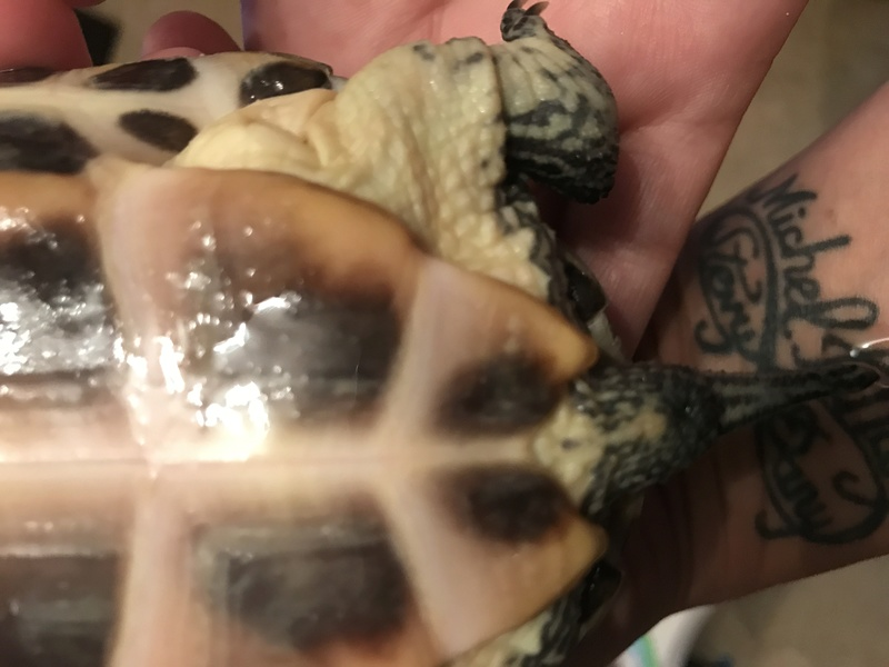 identification de ma jolie tortue Img_2412