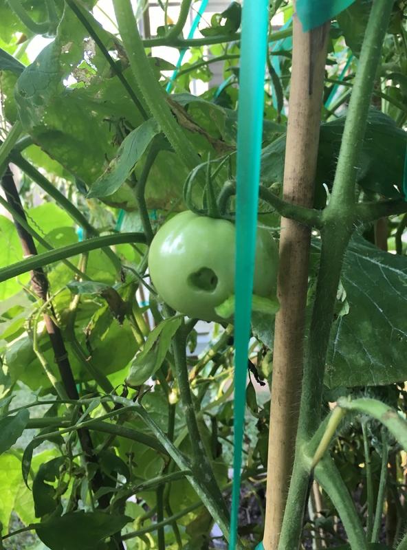 Caterpillar - Good or Bad? Img_4017