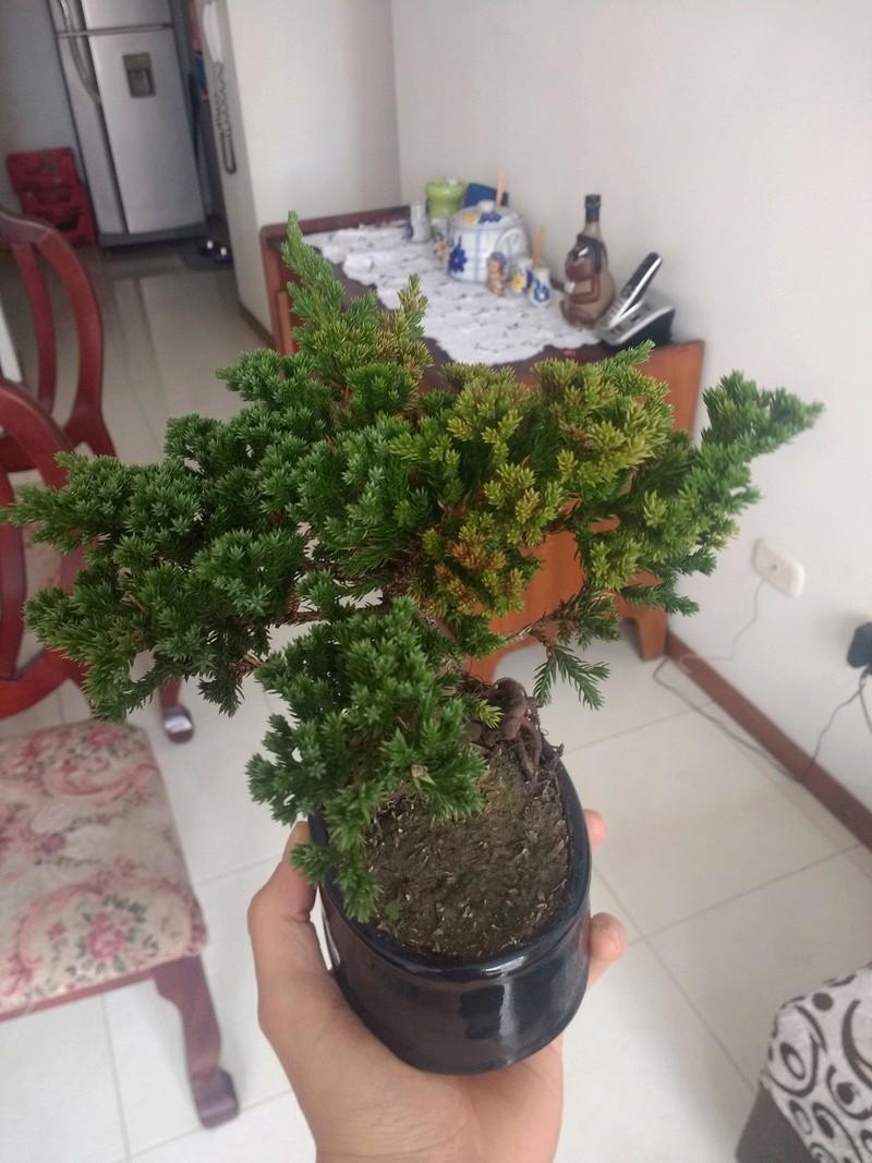 Ayuda con mi bonsai.  Img_2011