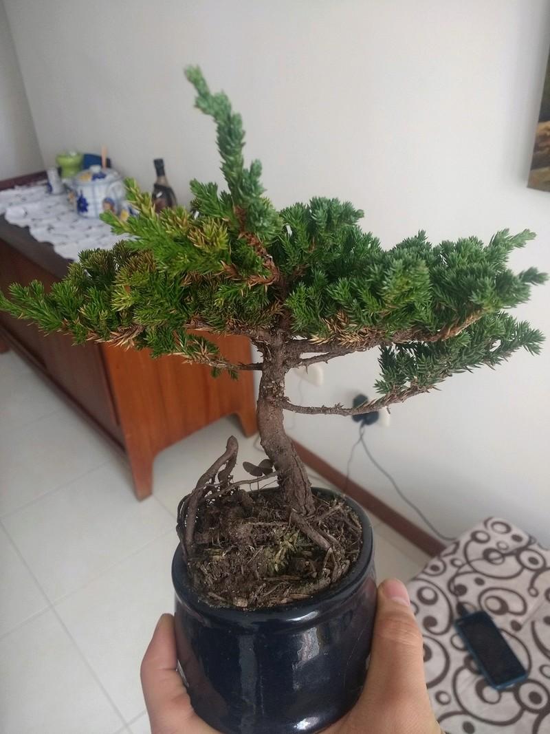Ayuda con mi bonsai.  Img_2013