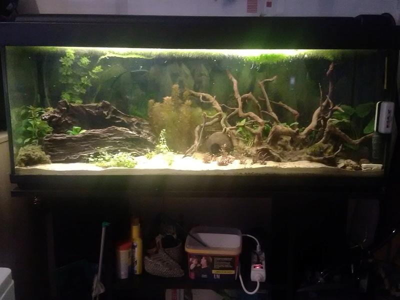 Mon Aquarium Img_2014