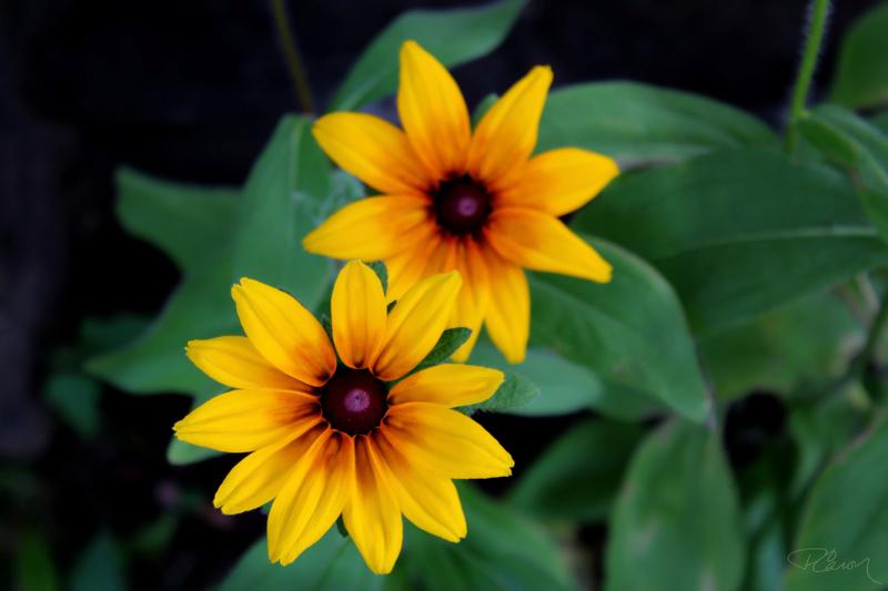 Bonjour à tous ! Fleurs10