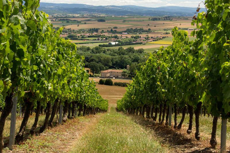 a travers les vignes  Dsc06412