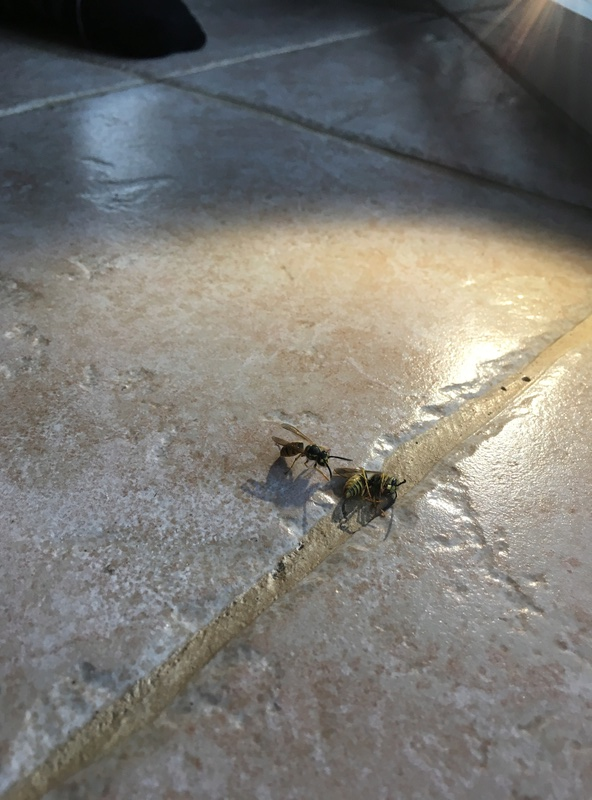 Trou dans le plafond: guêpes? Img_4711