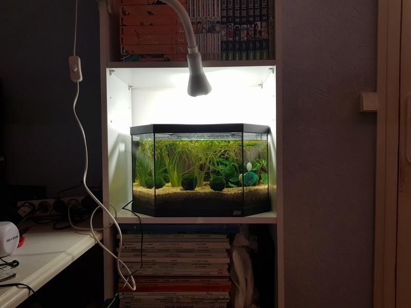 Préparation aquarium pour un futur BETTA - Page 3 20170916