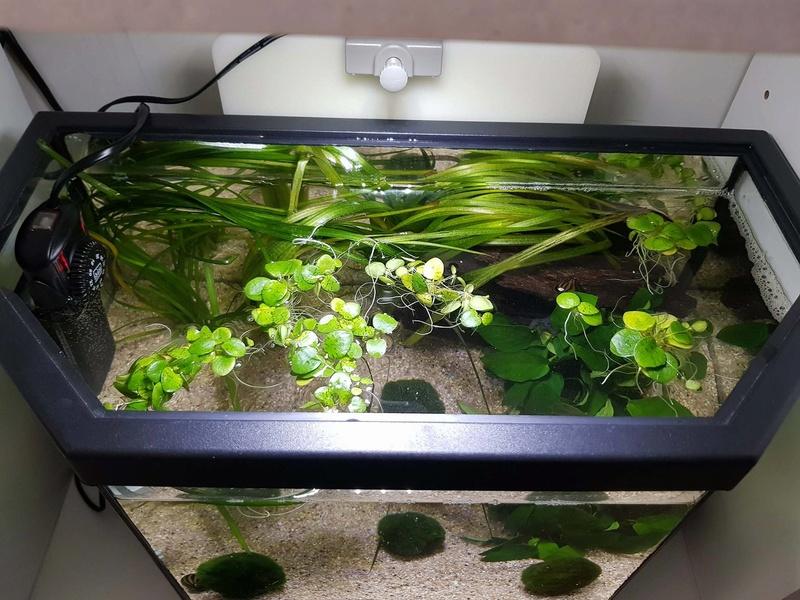Préparation aquarium pour un futur BETTA - Page 2 21297710