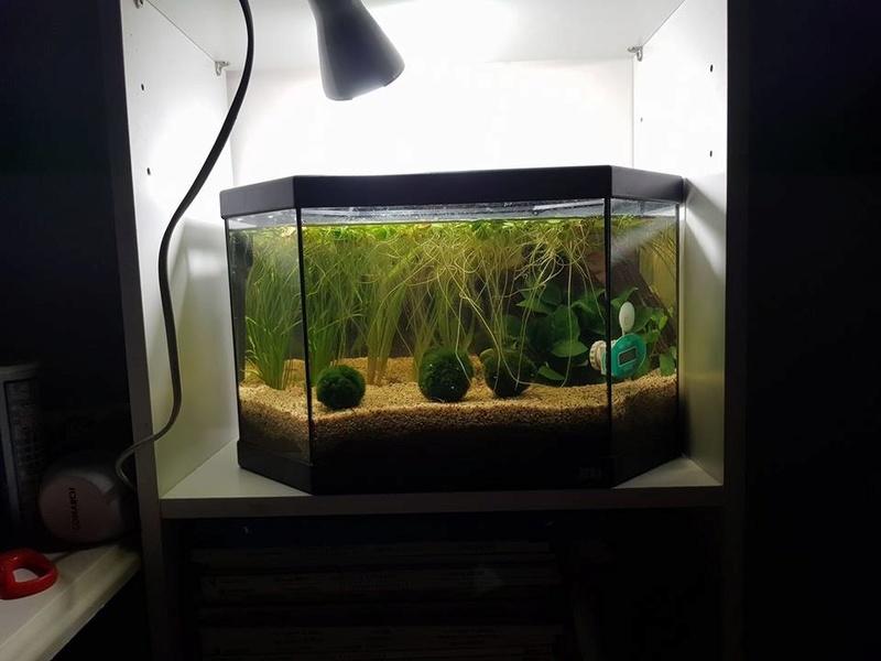 Préparation aquarium pour un futur BETTA - Page 3 21463210