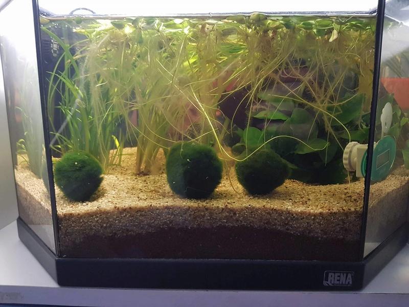 Préparation aquarium pour un futur BETTA - Page 3 33333310