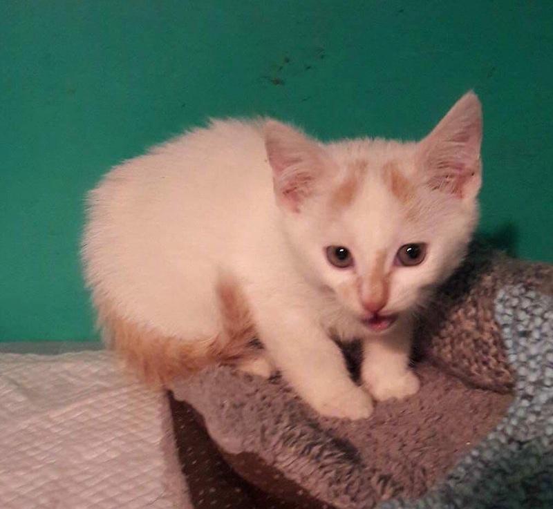 NEIGE chat mâle né le 01/07/2017  adopté en Janvier 2018 par Fabienne Img_0239
